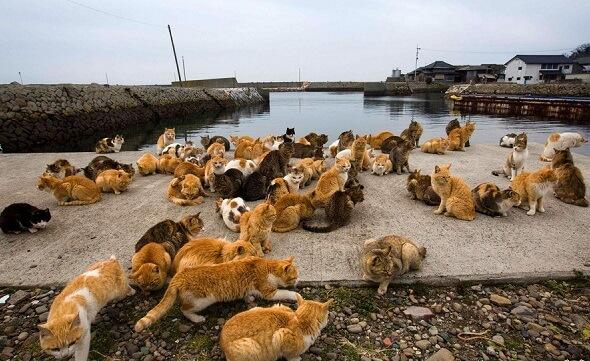 پادشاهی گربه