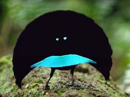 پرنده بهشت با رنگ هاب باور نکردنی
