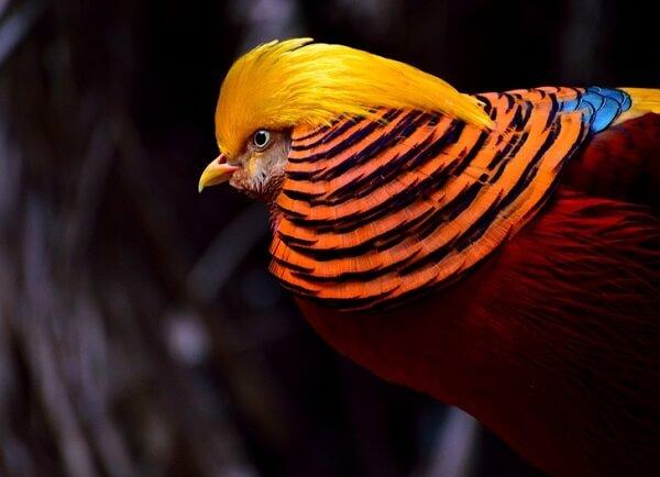 پرنده خارق العاده نارنجی