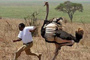 خطرناکترین پرندگان دنیا