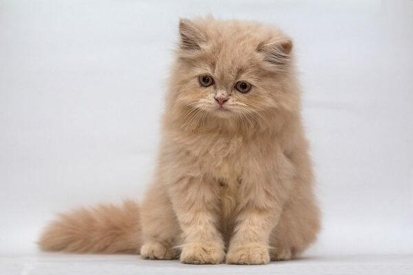 همه چیز در مورد زایمان و بارداری گربه