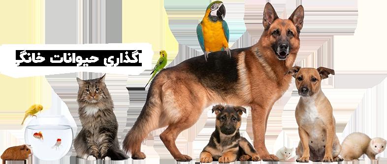 سفارش خرید حیوانات خانگی 1