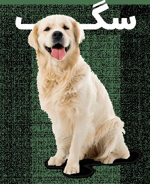 خرید لوازم سگ، اسباب بازی سگ و غذای سگ از پت شاپ آنلاین میگ میگ پت