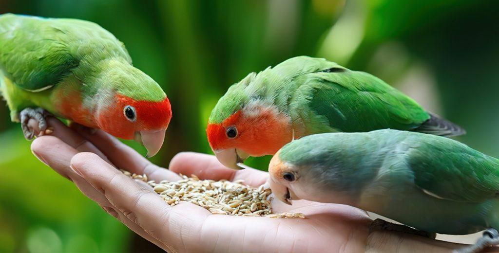 بیماری پرنده، مرگ پرنده و مسمومیت غذایی پرنده