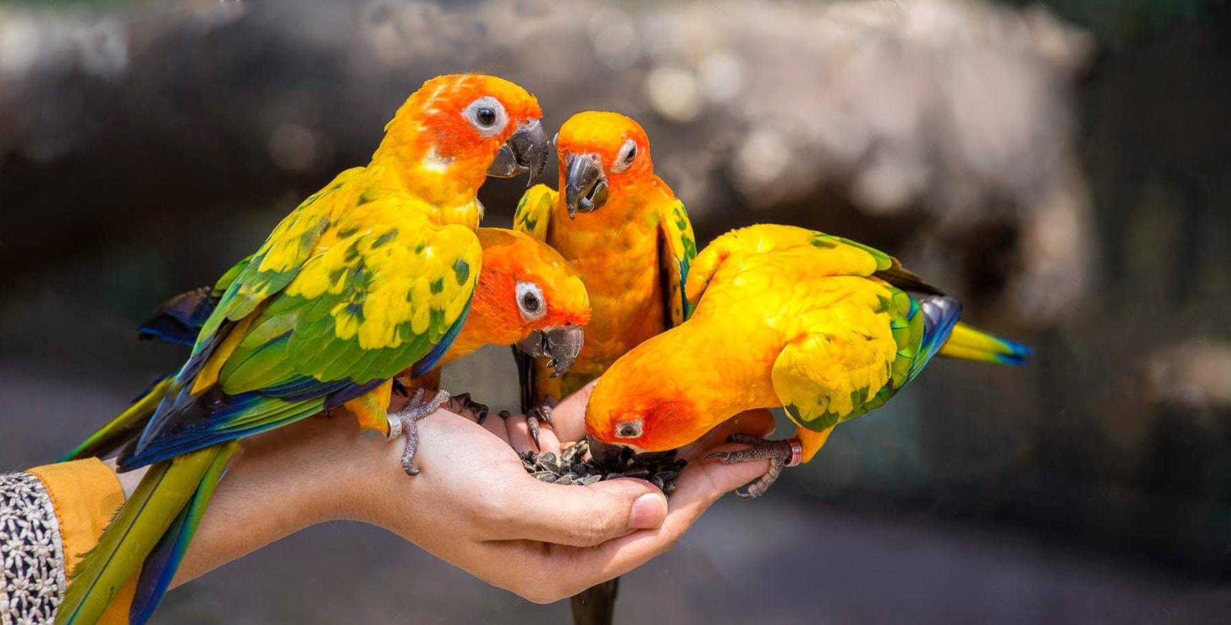 مسمومیت غذایی پرنده