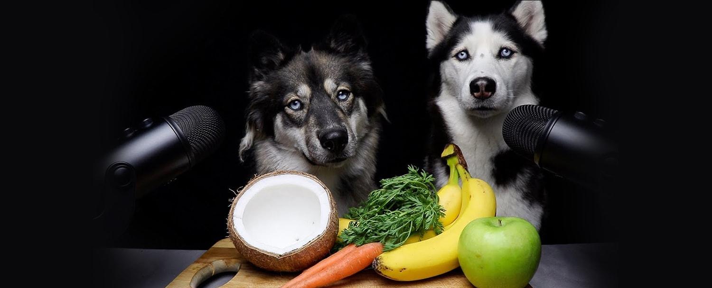رژیم غذایی هاسکی