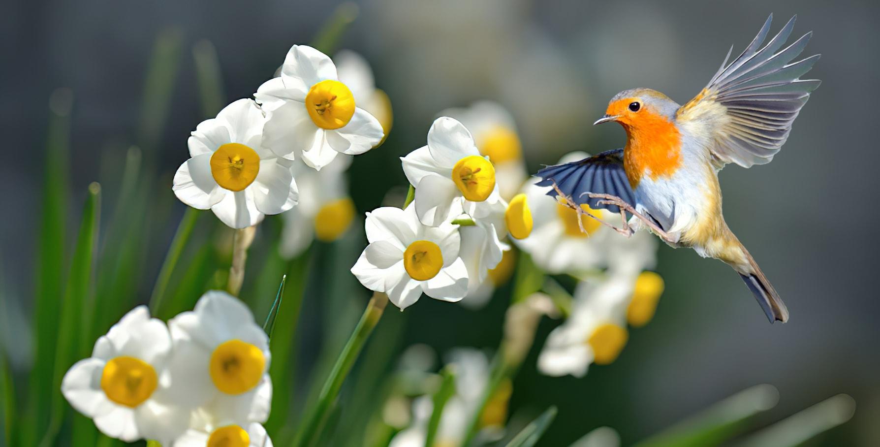 گل نرگس یک گیاه سمی برای پرنده