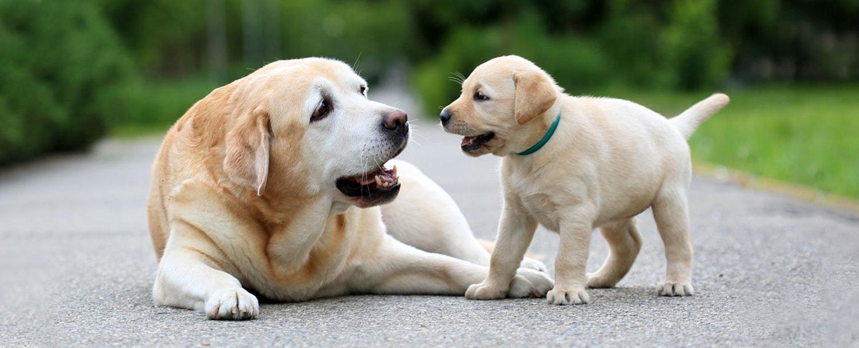 انتخاب اسم برای توله سگ