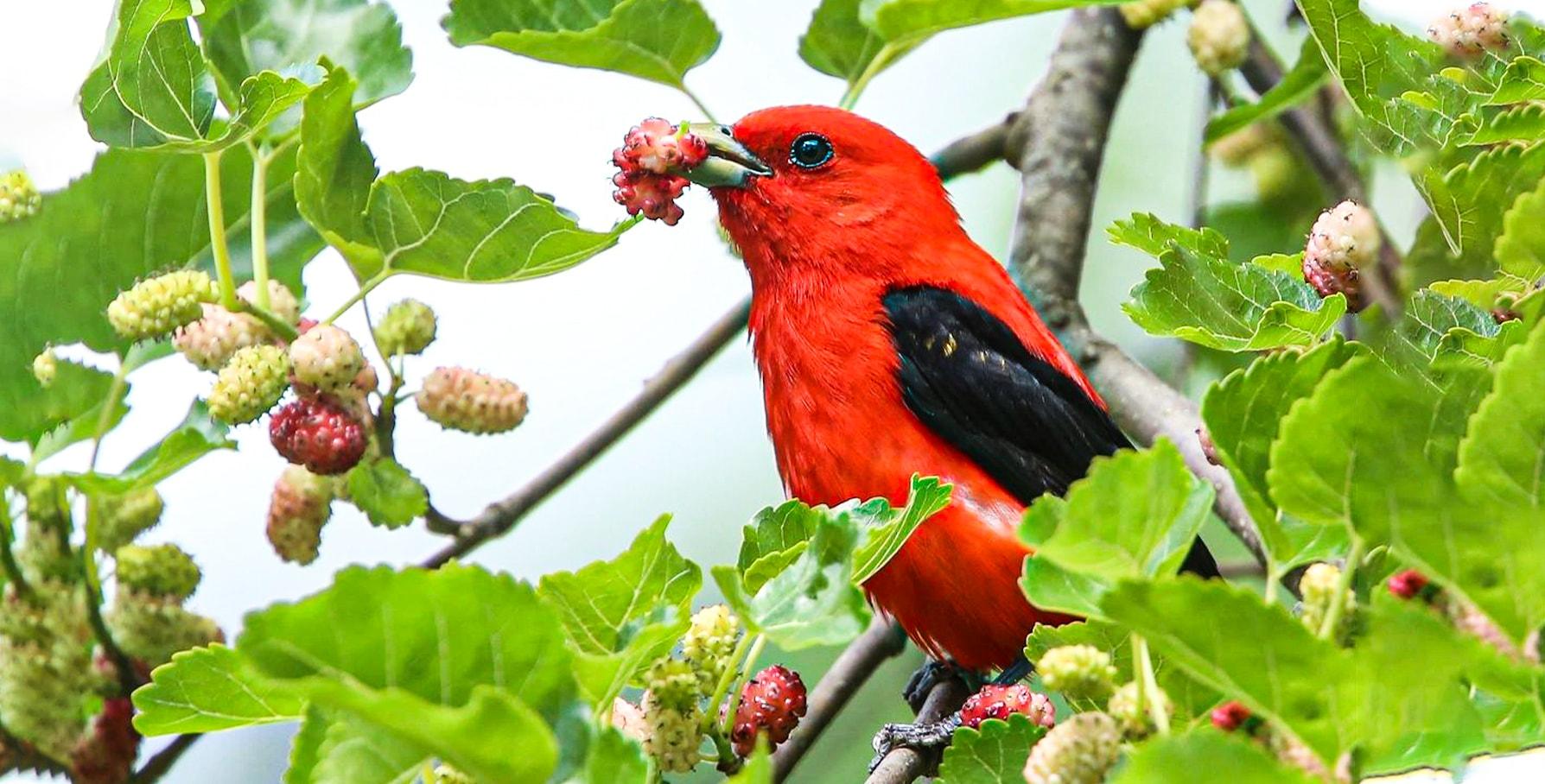 بیماری پرنده بر اثر مسمومیت غذایی