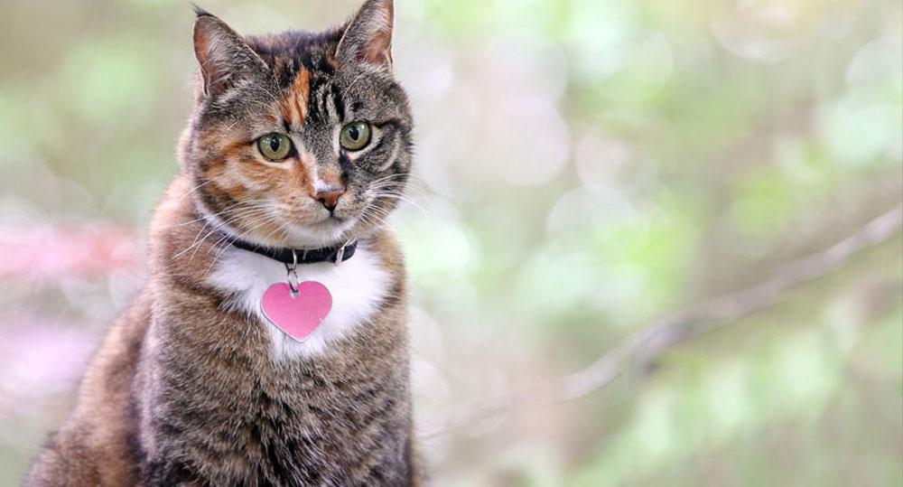 قلاده گربه
