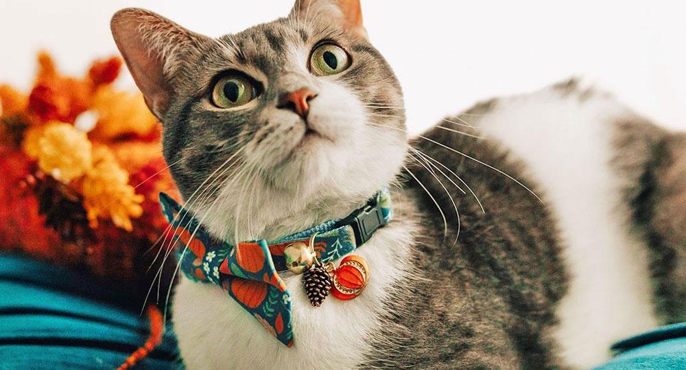 کاربرد قلاده گربه
