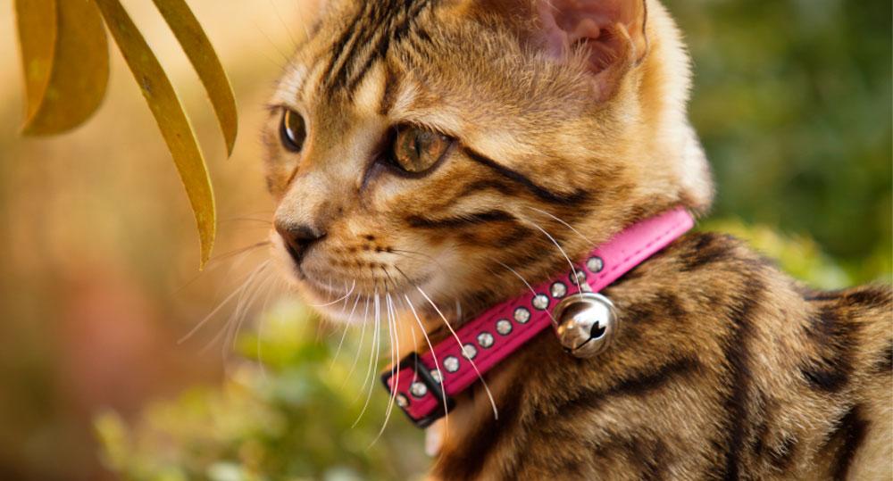 قلاده زنگوله دار گربه