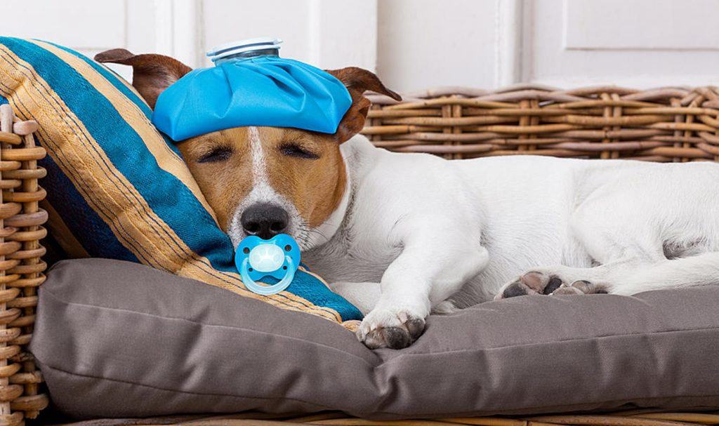 مرمراقبت از حیوانات آسیب دیده