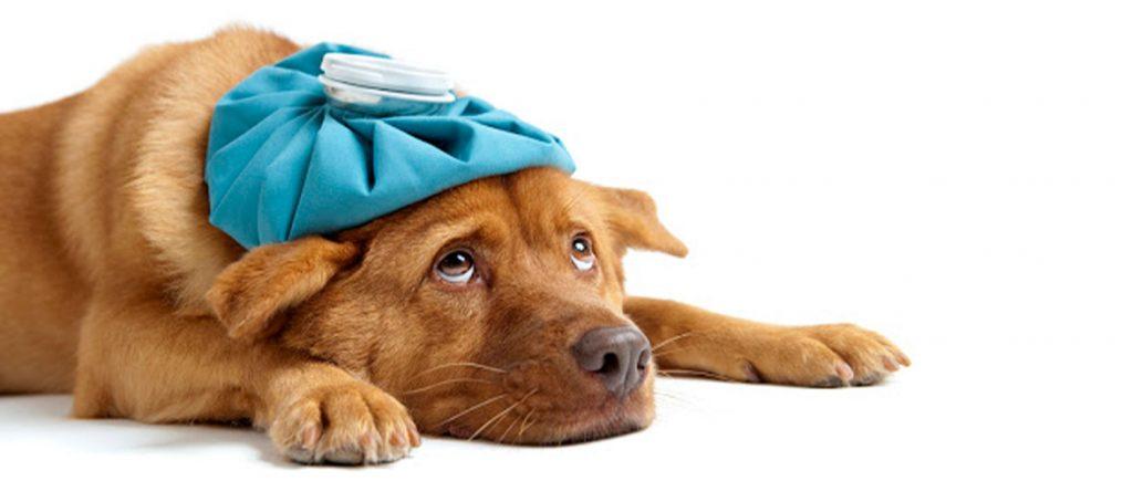 بیماری و مسمومیت روی در حیوانات خانگی