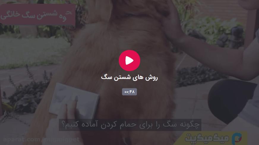 آموزش اصولی نحوه شستن سگ در خانه