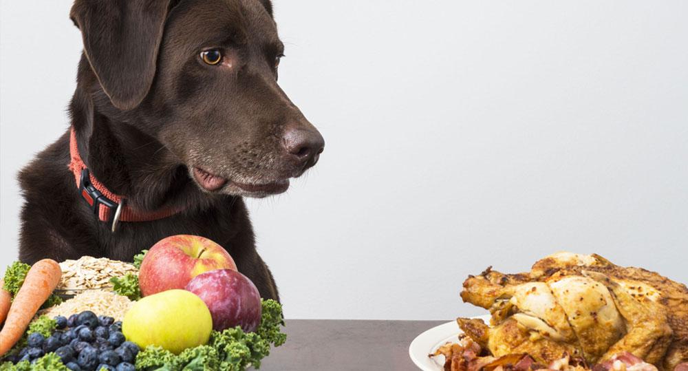 تاثیر رژیم غذایی بر رفتار سگ