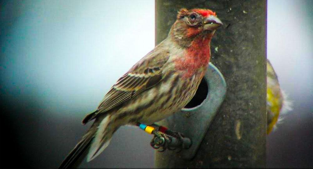3 راه تشخیص بیماری پرنده خانگی