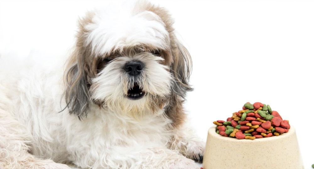 رژیم غذایی سگ شیتزو