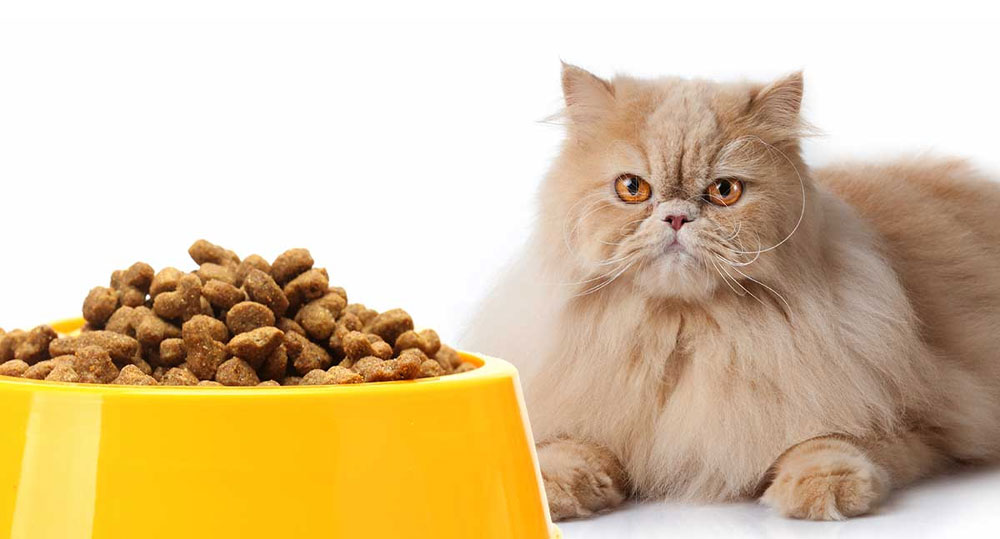 غذای مناسب برای گربه پرشین