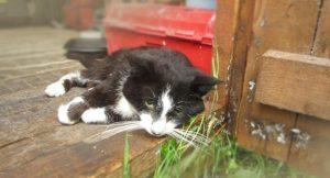 علل و علائم مسمومیت گربه