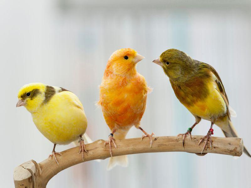 سلامت پرنده با ویتامین ها
