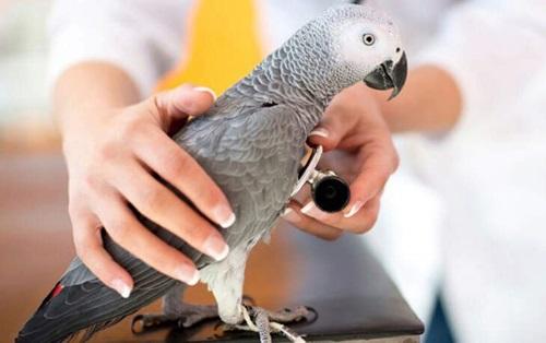 نقش غذا در طول عمر پرنده
