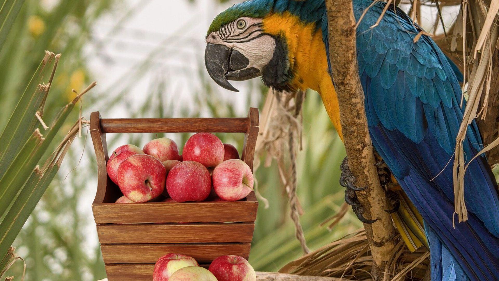 فواید میوه و سبزیجات در طول عمر پرنده