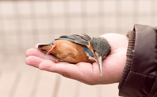 مراقبت از پرنده زخمی