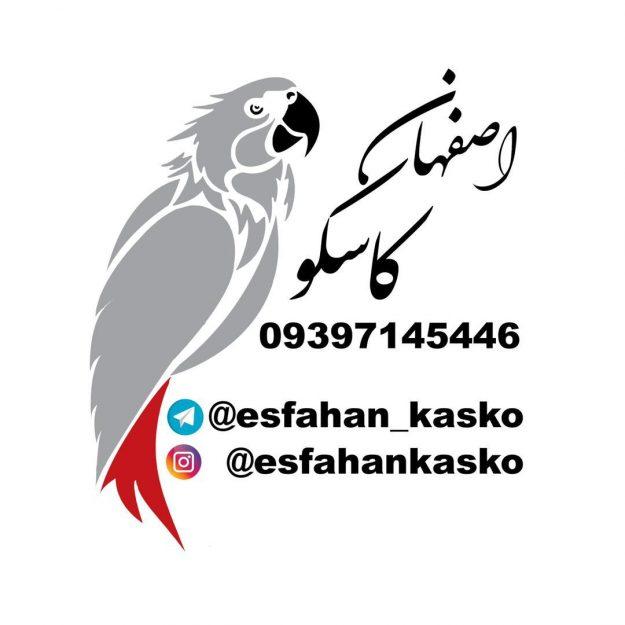 اصفهان کاسکو