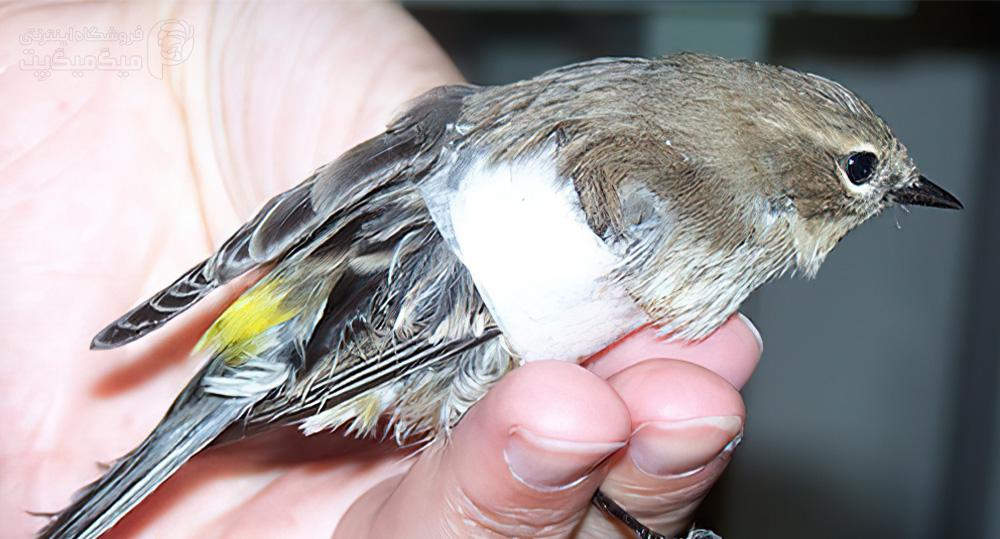 نجات پرنده زخمی