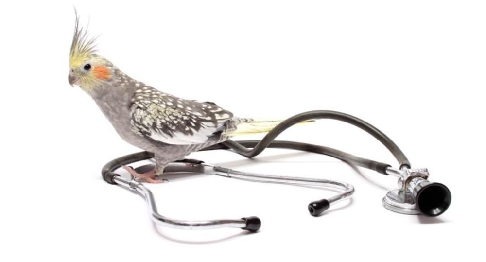 طول عمر پرنده - سلامت پرنده