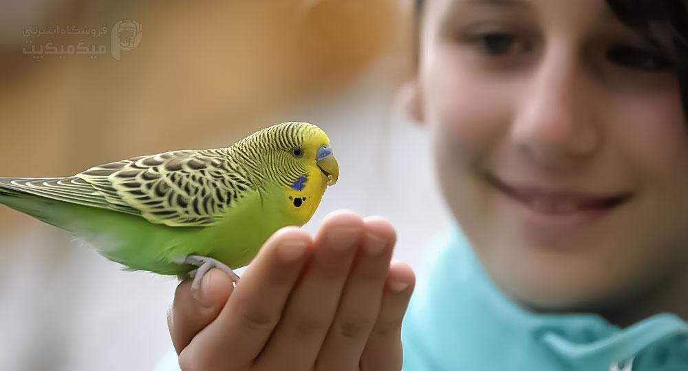 بهترین پرندگان خانگی برای کودکان