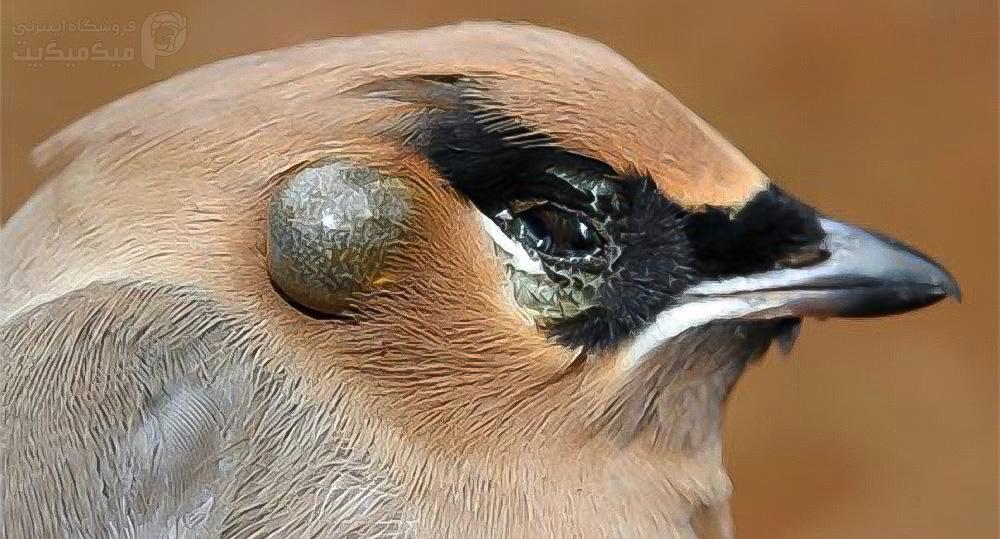 درمان گزش کنه پرنده