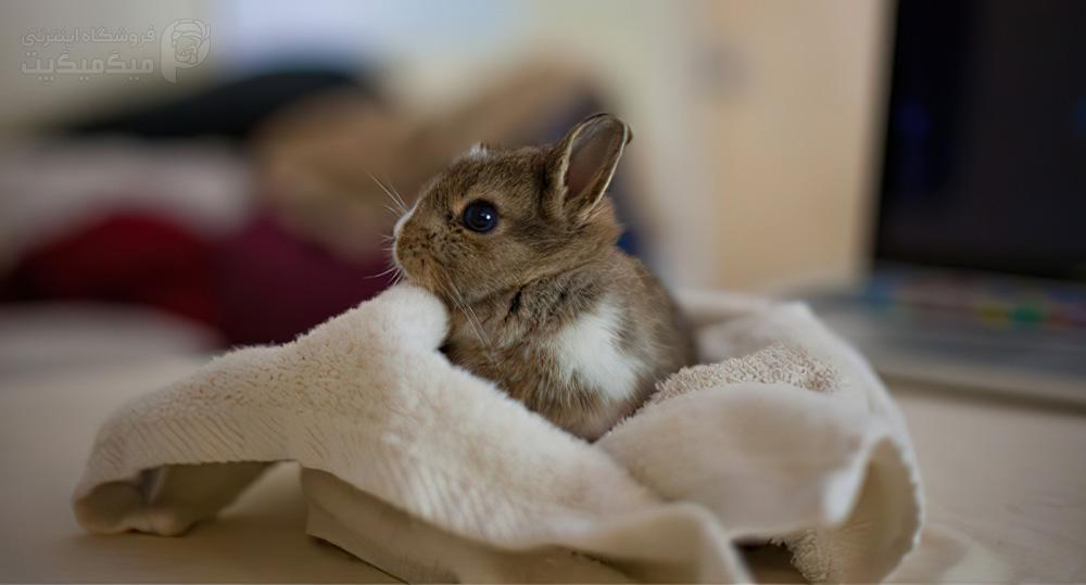 اقدامات لازم بعد از حمام دادن خرگوش