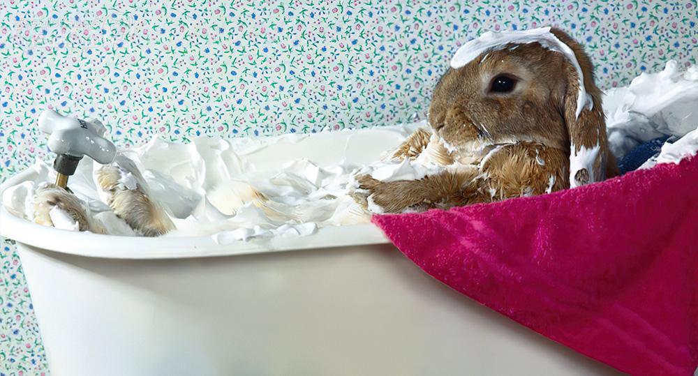 آیا میتوان خرگوش را حمام داد؟