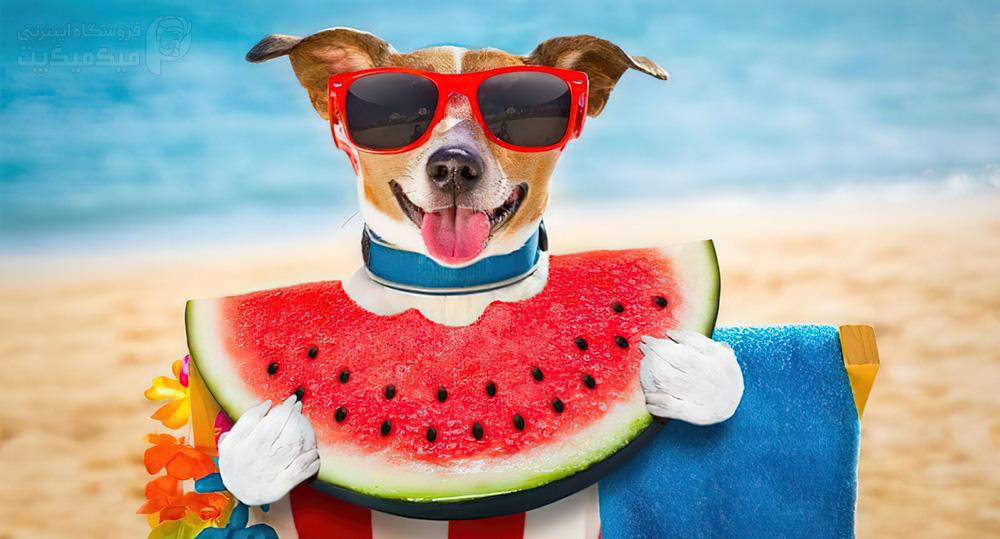 آماده کردن هندوانه برای سگ در تابستان