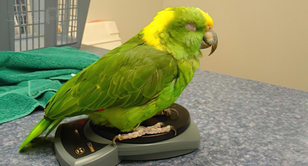 روشهای کاهش استرس پرنده بیمار