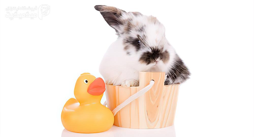 نحوه حمام دادن خرگوش