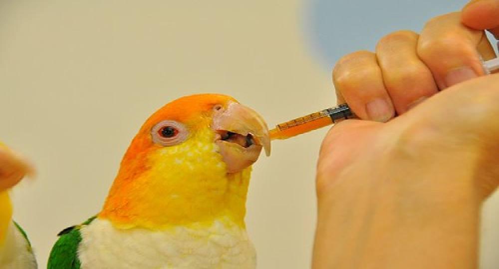 نحوه دارو دادن به پرنده
