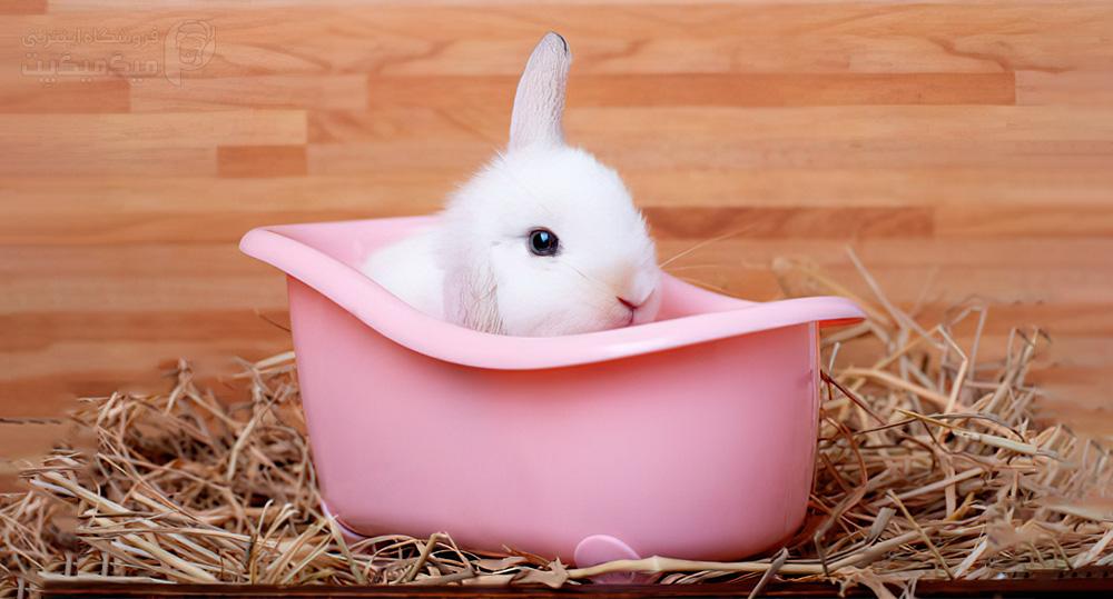 استرس خرگوش با خیس شدنش