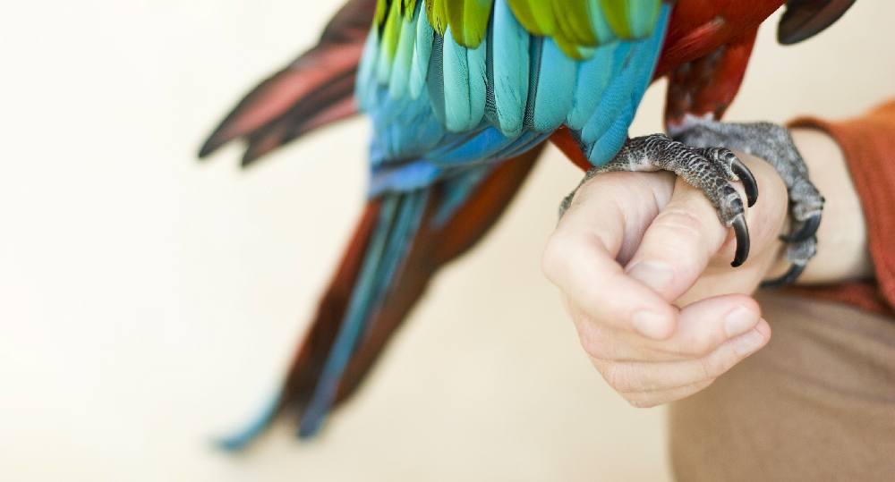 دلیل کوتاه کردن ناخن پرنده