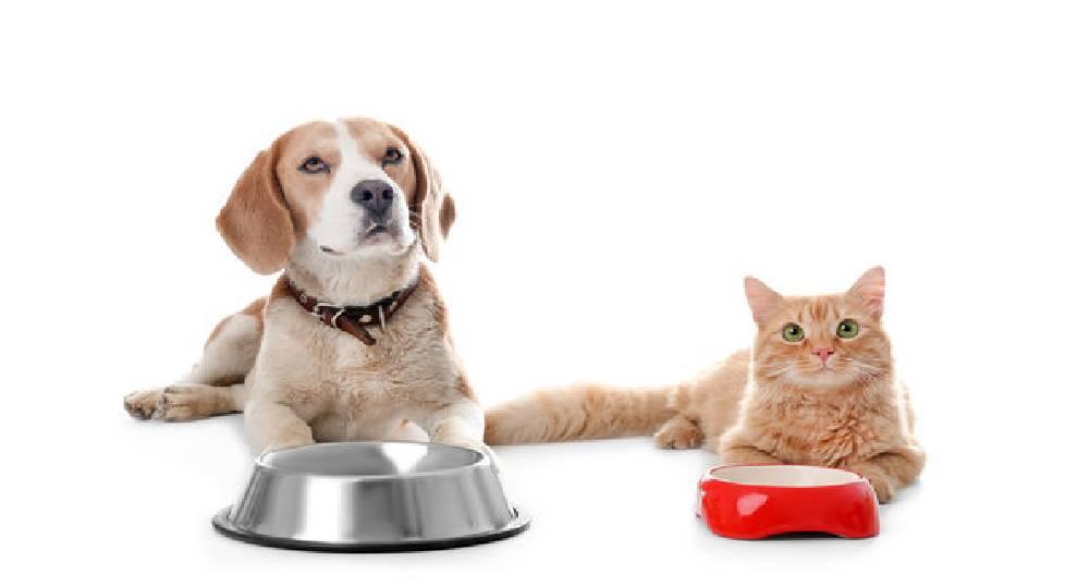 انتخاب پهترین پروبیوتیک برای سگ