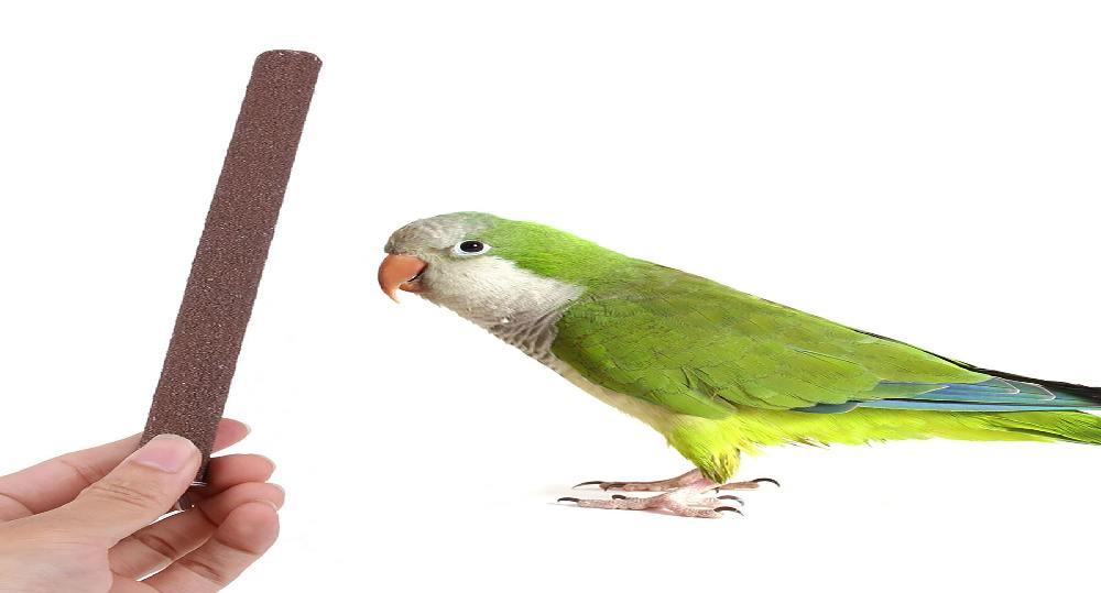 نشیمنگاه عالی برای جلوگیری از بلند شدن ناخن پرنده