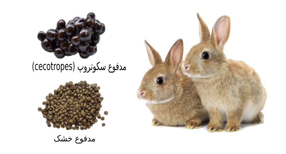 علت مدفوع خواری خرگوش چیست