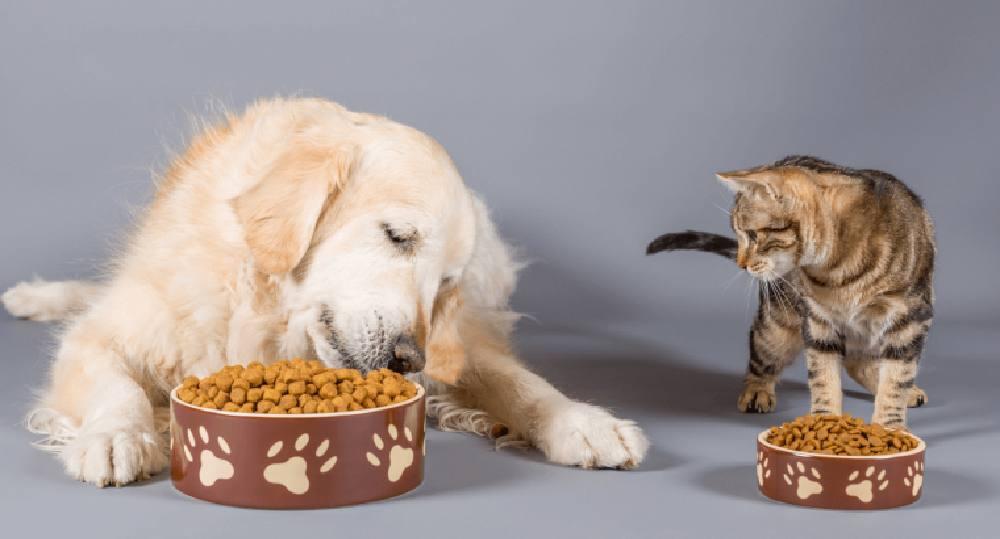 پروبیوتیک حیوانات خانگی چیست