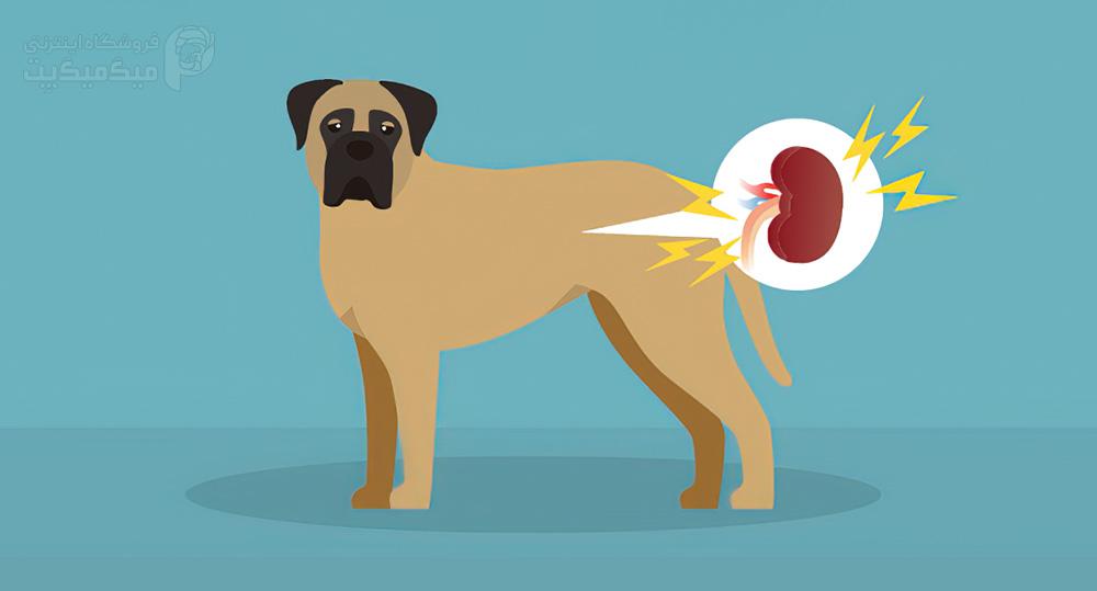نارسایی کلیه سگ چیست