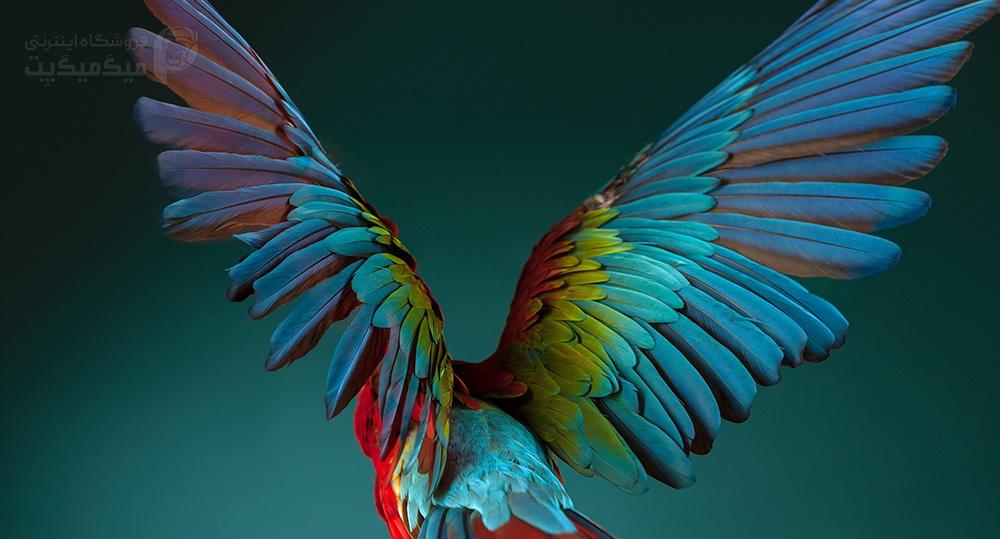 علاَئم کمبود ویتامین و تثیر در پر پرنده