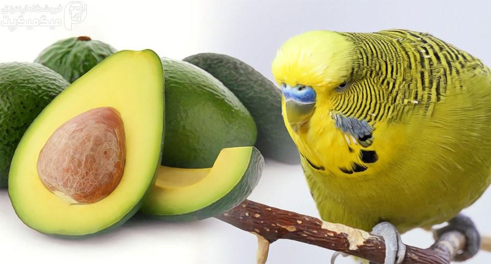 آووکادو برای پرنده مفید یا مضر است؟