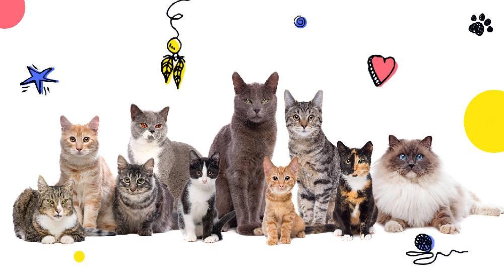 بهترین اسم گربه