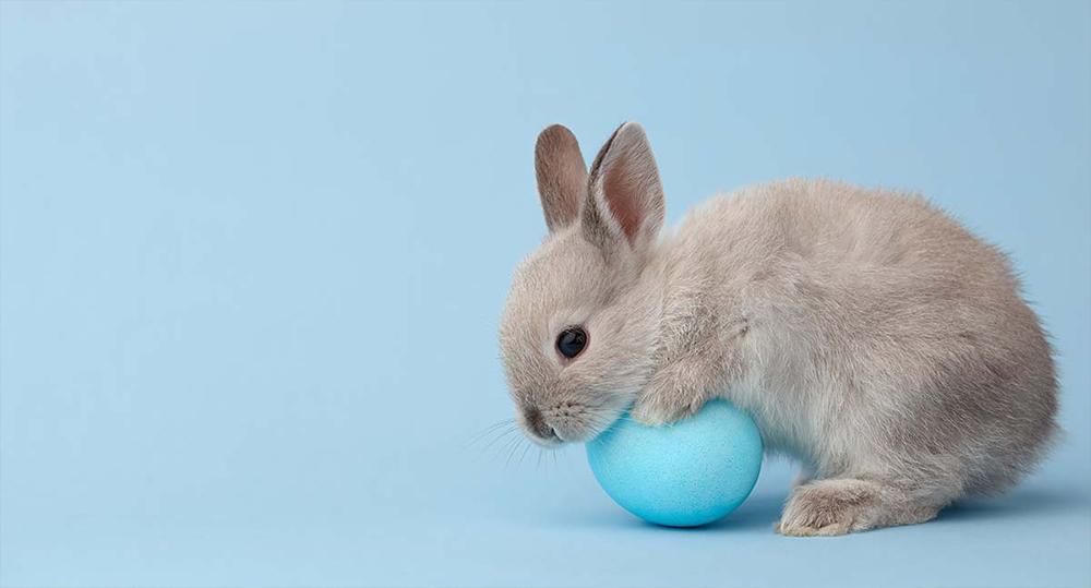 اسم برای خرگوش نر